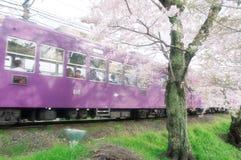 樱花和火车在日本 免版税库存图片