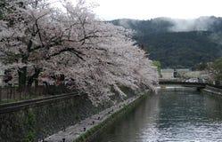 樱花和运河 图库摄影