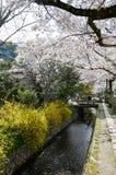 樱花和黄色开花在哲学家` s走,或者Tetsugaku没有Michi,京都 图库摄影