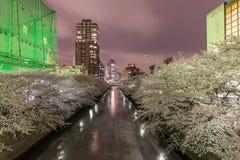 樱花在东京,日本 库存照片