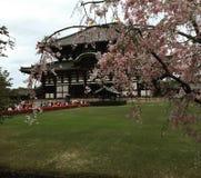 樱花在奈良 库存图片