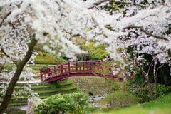 樱花在日本庭院里 免版税库存图片