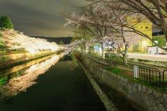 樱花在晚上,京都在夜之前 免版税库存照片