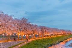 樱花在晚上 图库摄影