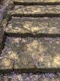 樱花在石台阶的花瓣飘落 免版税库存照片