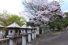 樱花季节 日本 库存照片