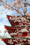 樱花季节 免版税库存图片