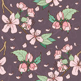樱花无缝的样式 免版税库存照片