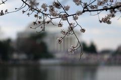 樱花有纪念背景和潮水坞 图库摄影