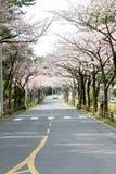 樱花本质上 库存照片