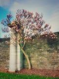 樱花树 库存照片