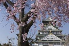 樱花的桃红色花和在大阪城堡后在日本 免版税库存图片