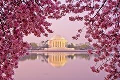 樱花节日在华盛顿特区, 免版税库存图片