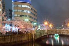 樱花街道照明在横滨,日本 免版税库存图片