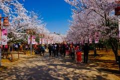 樱花谷,无锡,瓷 免版税图库摄影