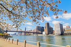 樱花近东河和视图在曼哈顿,纽约摩天大楼  免版税库存照片