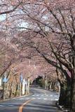 樱花隧道在伊豆高地的 库存照片