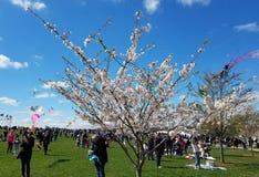 樱花风筝节日在华盛顿特区, 库存图片