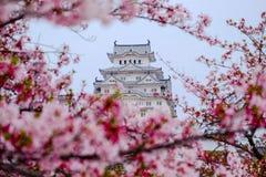 樱花围拢的姬路城堡 这是联合国科教文组织wor 图库摄影