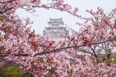 樱花围拢的姬路城堡 这是联合国科教文组织wor 免版税库存照片
