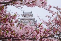 樱花围拢的姬路城堡 这是联合国科教文组织wor 库存照片