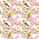 樱花-苹果,佐仓开花,逗人喜爱的鸟 背景花卉无缝 水彩 免版税库存照片