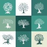 橄榄和在颜色背景隔绝的橡树剪影 免版税库存图片