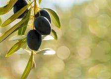 橄榄有绿色bokeh背景 免版税库存图片