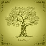 橄榄树。橄榄油。传染媒介橄榄树。对标签,组装。 免版税库存照片