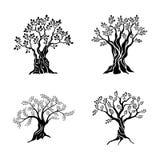 橄榄树剪影在白色背景隔绝的象集合 油传染媒介标志 优质质量例证商标设计 库存例证