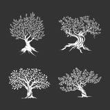 橄榄树剪影在黑暗的背景隔绝的象集合 免版税库存照片