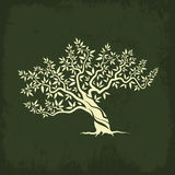 橄榄树剪影象孤立 图库摄影