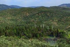 橄榄树和山 免版税库存图片