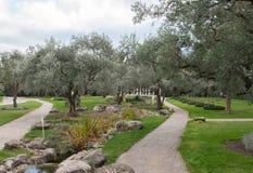 橄榄树和雕塑在一个异乎寻常的公园 免版税库存照片