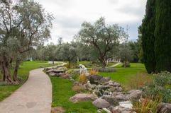 橄榄树和雕塑在一个异乎寻常的公园 库存照片