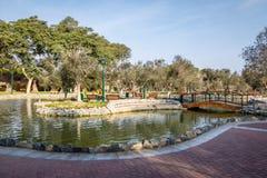 橄榄树小树林公园& x28; 或者El奥利瓦尔Forest& x29;在圣Isidro区-利马,秘鲁 库存图片