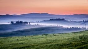 橄榄树小树林和葡萄园农场在有雾的早晨 免版税库存照片