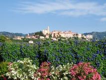 橄榄树小树林和葡萄园包围的小山顶村庄 免版税库存图片