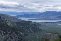 橄榄树小树林的全景在福基斯州-希腊 库存图片
