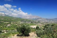 橄榄树小树林风景看法,罗得岛海岛(希腊) 库存图片
