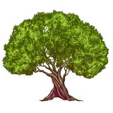 橄榄树手拉的传染媒介例证现实剪影颜色 库存照片