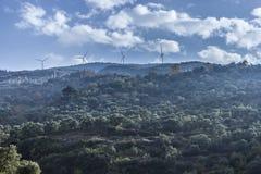 橄榄树报道了山小山看起来地毯 库存照片