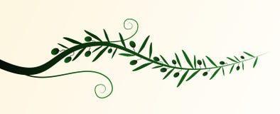 橄榄树枝传染媒介 图库摄影
