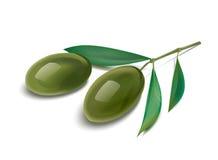 橄榄树枝例证 免版税库存图片