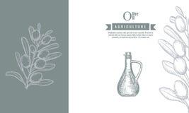 橄榄树枝和瓶横幅模板和海报与剪影样式 也corel凹道例证向量 向量例证