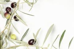 橄榄树枝杈 库存照片