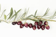 橄榄树枝杈 免版税库存照片