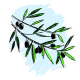 橄榄树枝的传染媒介例证 免版税库存照片