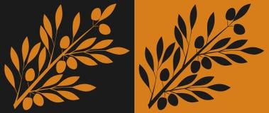 橄榄树枝 库存图片