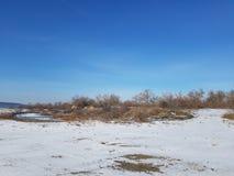 橄榄树树丛  库存图片